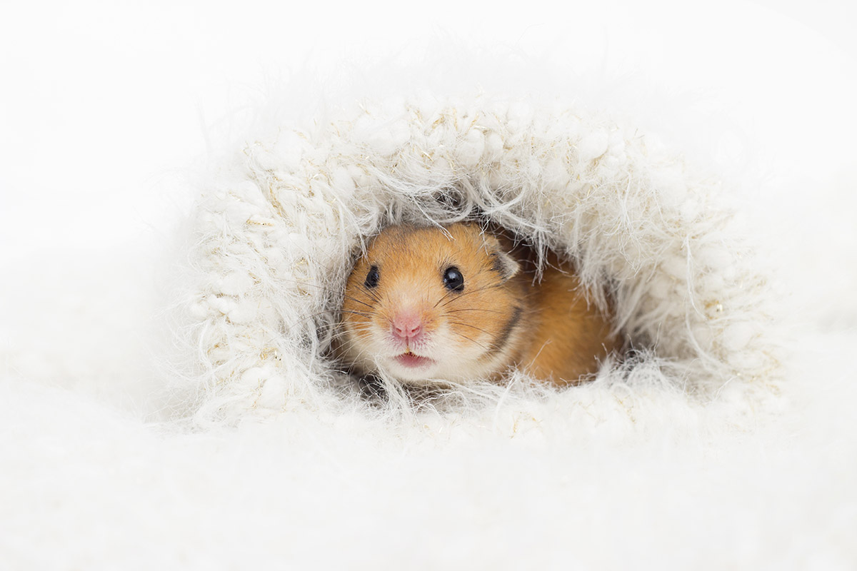 Small Animals.... keep them warm and safe